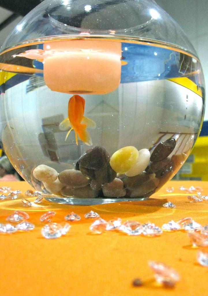yep, goldfish!